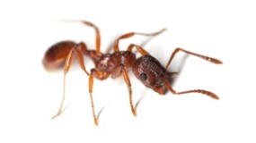 Ant & Insect Control