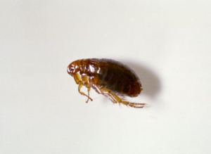 Get Rid of Bed Bugs in Eastern Mass